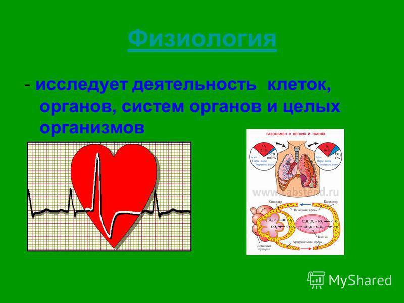 Физиология - исследует деятельность клеток, органов, систем органов и целых организмов