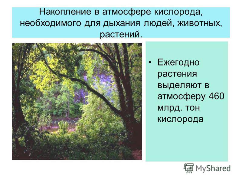 Накопление в атмосфере кислорода, необходимого для дыхания людей, животных, растений. Ежегодно растения выделяют в атмосферу 460 млрд. тон кислорода