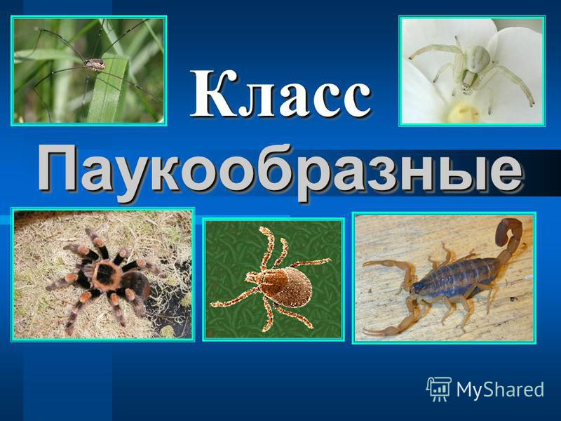 Паукообразные Паукообразные Класс Класс