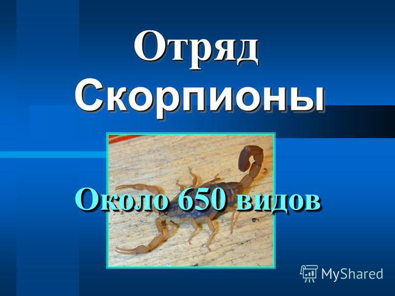 Скорпионы Скорпионы Отряд Отряд Около 650 видов
