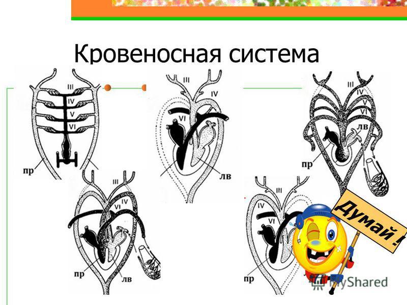 Кровеносная система Думай !