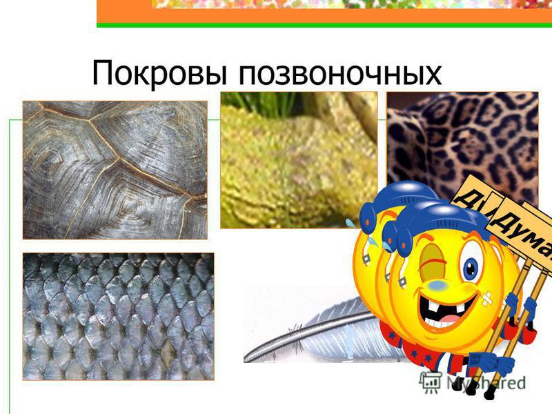 Покровы позвоночных Думай !