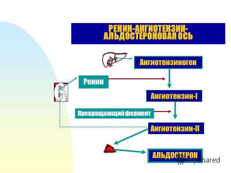 РЕНИН-АНГИОТЕНЗИН- АЛЬДОСТЕРОНОВАЯ ОСЬ Ангиотензиноген Ренин Ангиотензин-I Превращающий фермент Ангиотензин-II АЛЬДОСТЕРОН