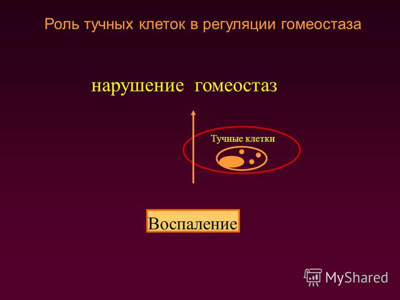 гомеостаз Тучные клетки Роль тучных клеток в регуляции гомеостаза Ответ Воспаление нарушение
