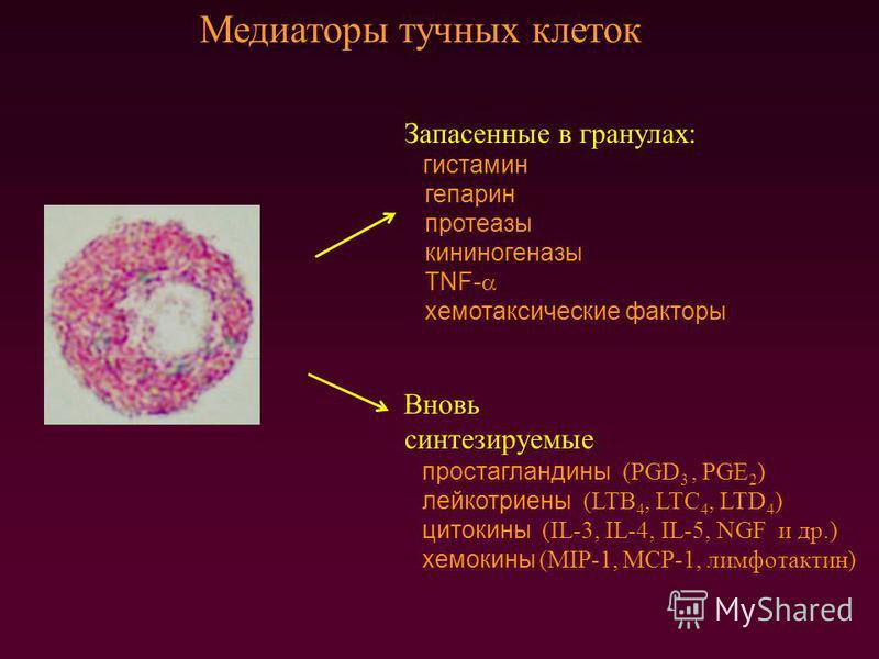 Медиаторы тучных клеток Запасенные в гранулах: гистамин гепарин протеазы кининогеназы TNF- хемотаксические факторы Вновь синтезируемые: простагландины (PGD 3, PGE 2 ) лейкотриены (LTB 4, LTC 4, LTD 4 ) цитокины (IL-3, IL-4, IL-5, NGF и др.) хемокины