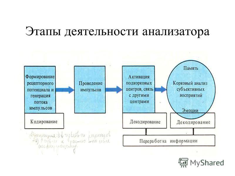 Этапы деятельности анализатора