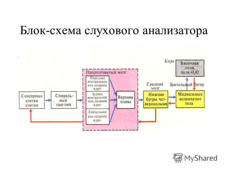 Блок-схема слухового анализатора