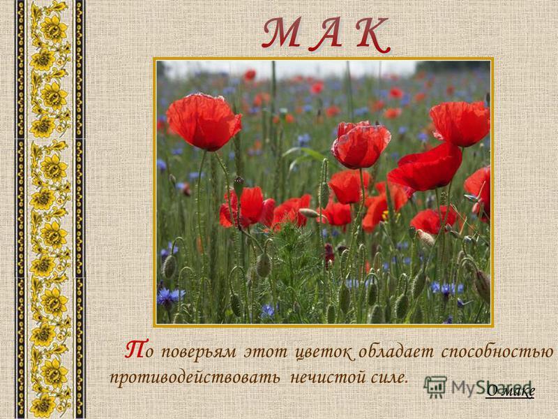 О маке П о поверьям этот цветок обладает способностью противодействовать нечистой силе.