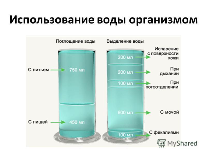 Использование воды организмом