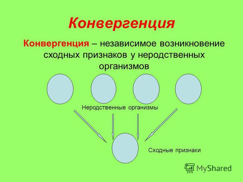 Конвергенция Конвергенция – независимое возникновение сходных признаков у неродственных организмов Сходные признаки Неродственные организмы