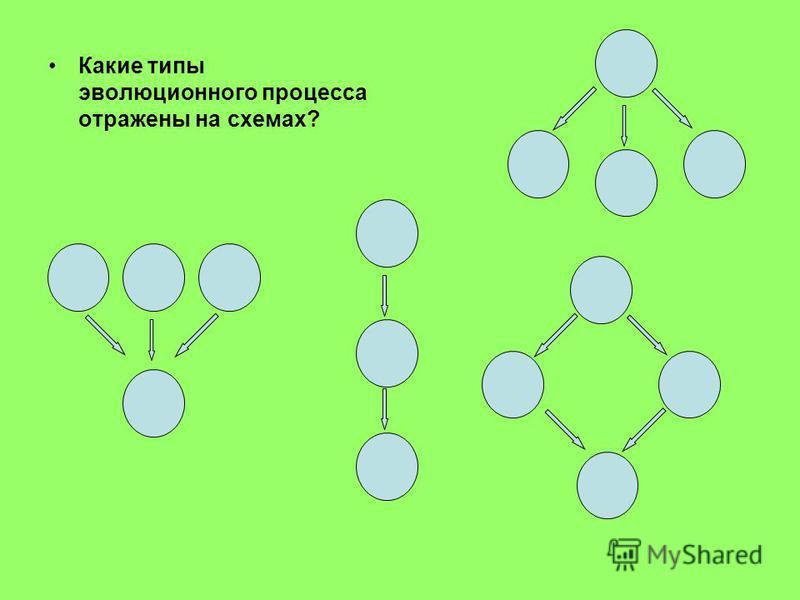 Какие типы эволюционного процесса отражены на схемах?