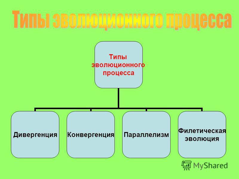 Типы эволюционного процесса Дивергенция КонвергенцияПараллелизм Филетическая эволюция