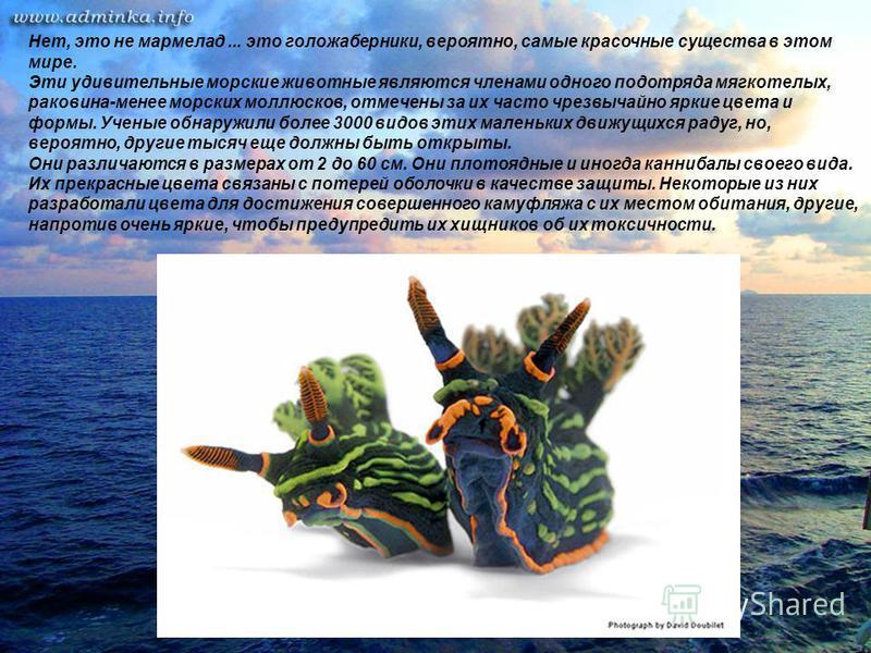 Нет, это не мармелад... это голожаберники, вероятно, самые красочные существа в этом мире. Эти удивительные морские животные являются членами одного подотряда мягкотелых, раковина-менее морских моллюсков, отмечены за их часто чрезвычайно яркие цвета