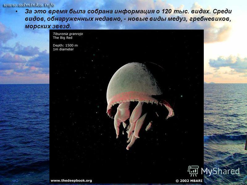 За это время была собрана информация о 120 тыс. видах. Среди видов, обнаруженных недавно, - новые виды медуз, гребневиков, морских звезд.