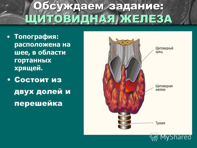 Обсуждаем задание: ЩИТОВИДНАЯ ЖЕЛЕЗА Топография: расположена на шее, в области гортанных хрящей. Состоит из двух долей и перешейка