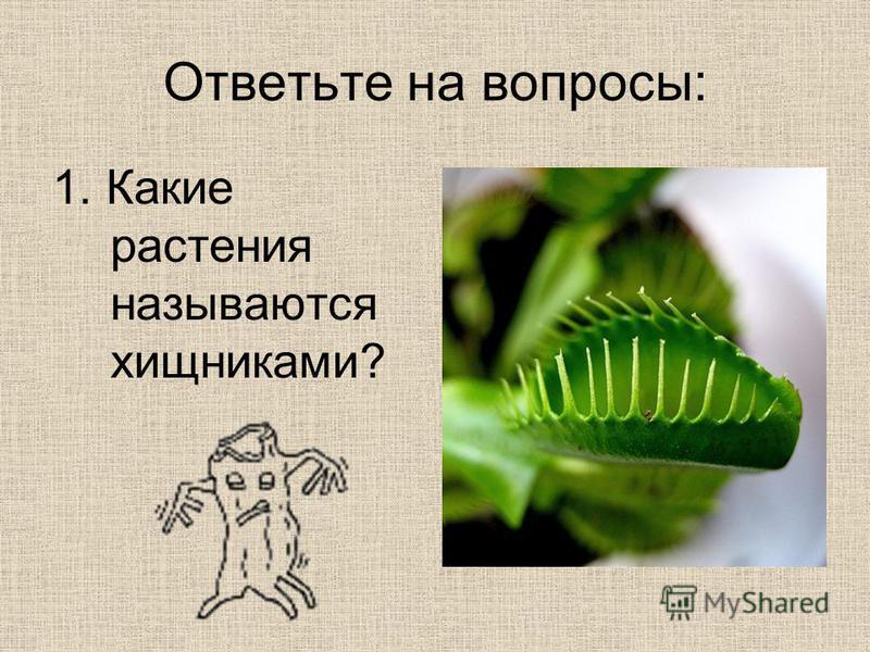 Ответьте на вопросы: 1. Какие растения называются хищниками?