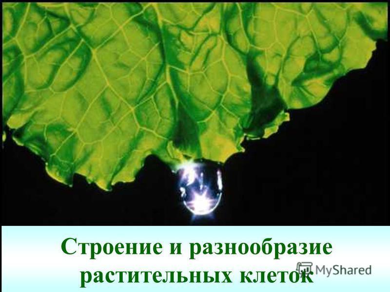 Строение и разнообразие растительных клеток