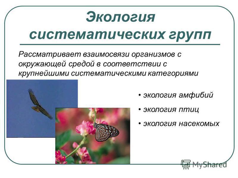 Экология систематических групп Рассматривает взаимосвязи организмов с окружающей средой в соответствии с крупнейшими систематическими категориями экология амфибий экология птиц экология насекомых