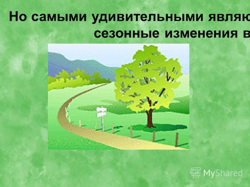 Но самыми удивительными являются сезонные изменения в жизни деревьев.