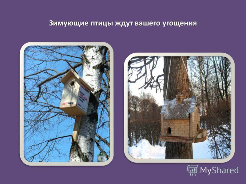 Зимующие птицы ждут вашего угощения