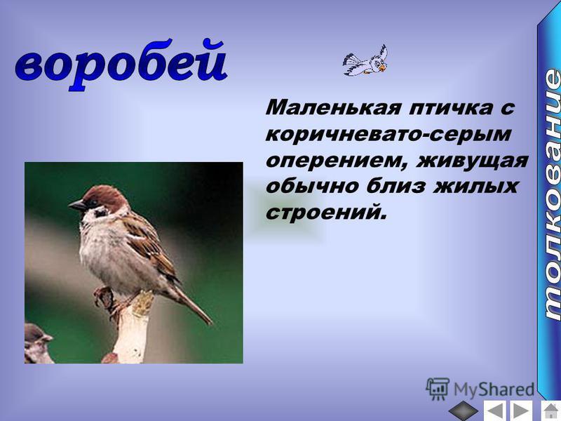 Маленькая птичка с коричневато-серым оперением, живущая обычно близ жилых строений.