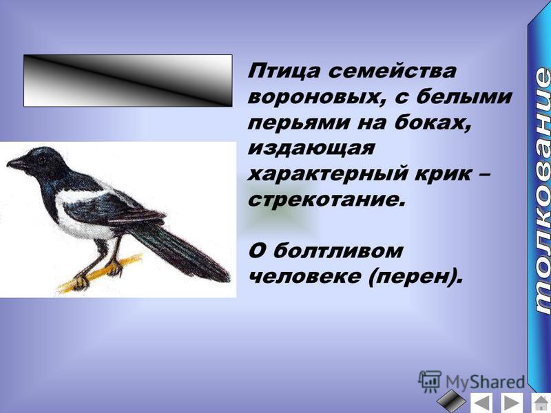 Птица семейства вороновых, с белыми перьями на боках, издающая характерный крик – стрекотание. О болтливом человеке (перен).