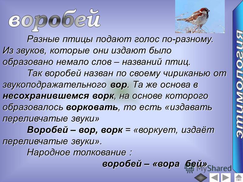Разные птицы подают голос по-разному. Из звуков, которые они издают было образовано немало слов – названий птиц. Так воробей назван по своему чириканью от звукоподражательного вор. Та же основа в несохранившемся ворк, на основе которого образовалось