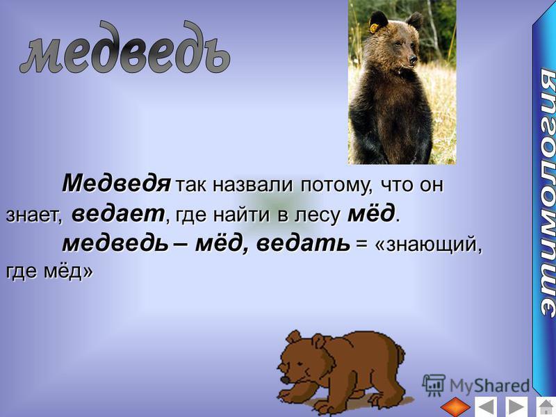Медведя так назвали потому, что он знает, ведает, где найти в лесу мёд. медведьь – мёд, ведать = «знающий, где мёд»