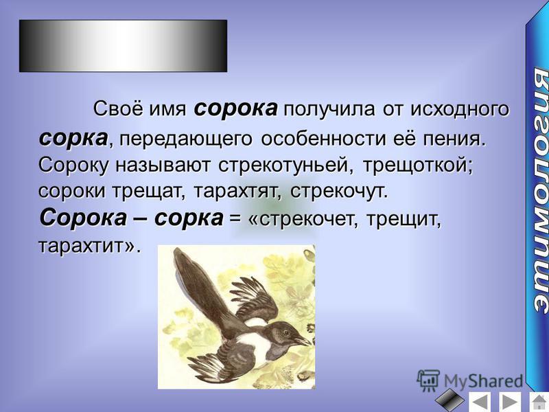 Своё имя сорока получила от исходного сорка, передающего особенности её пения. Сороку называют стрекотуньей, трещоткой; сороки трещат, тарахтят, стрекочут. Сорока – сорка = «стрекочет, трещит, тарахтит».