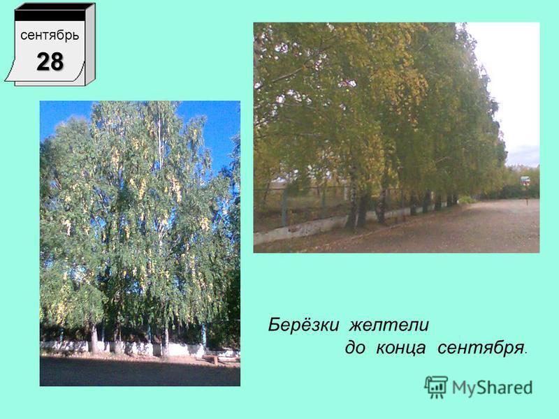 1 сентябрь 1 Я увидела, что на берёзках появились ветки с жёлтыми листьями.