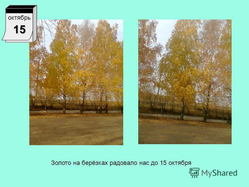 октябрь 1 Все листья с других деревьев опали, а берёзка покрыта золотыми листьями.