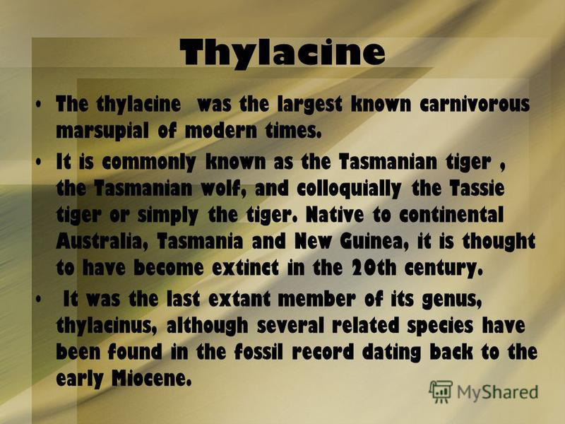 Thylacine The thylacine was the largest known carnivorous marsupial of modern times. It is commonly known as the Tasmanian tiger, the Tasmanian wolf, and colloquially the Tassie tiger or simply the tiger. Native to continental Australia, Tasmania and
