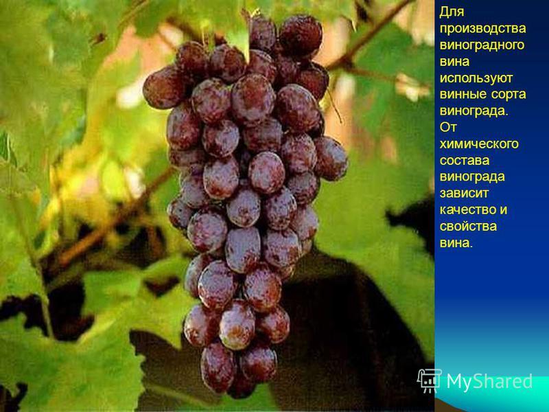 Для производства виноградного вина используют винные сорта винограда. От химического состава винограда зависит качество и свойства вина.
