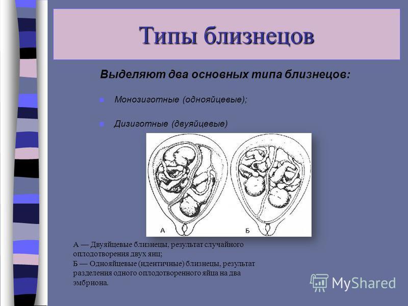 Типы близнецов Выделяют два основных типа близнецов: Монозиготные (однояйцевые); Дизиготные (двуяйцевые) А Двуяйцевые близнецы, результат случайного оплодотворения двух яиц; Б Однояйцевые (идентичные) близнецы, результат разделения одного оплодотворе