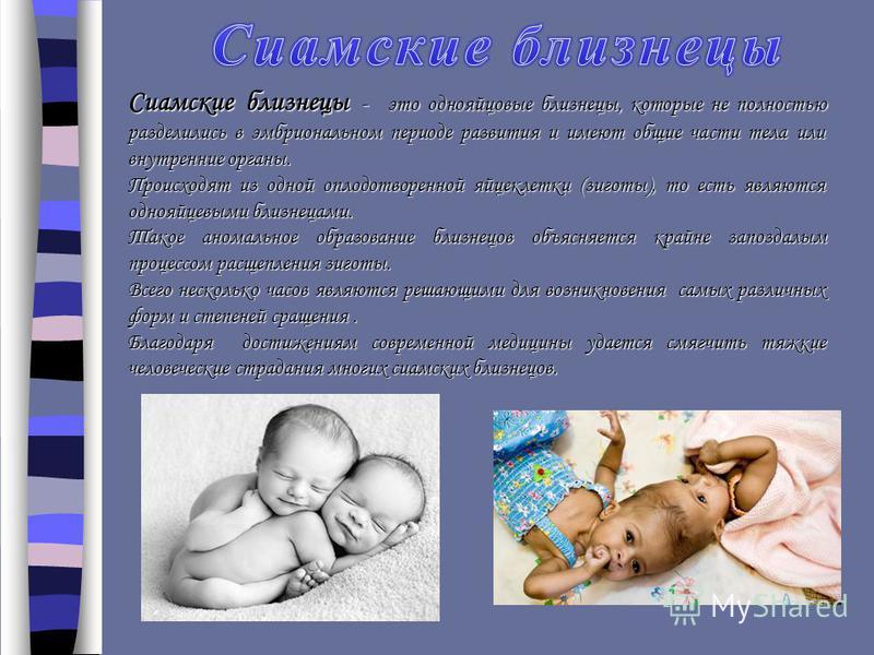 Сиамские близнецы - это однояйцовые близнецы, которые не полностью разделились в эмбриональном периоде развития и имеют общие части тела или внутренние органы. Происходят из одной оплодотворенной яйцеклетки (зиготы), то есть являются однояйцевыми бли