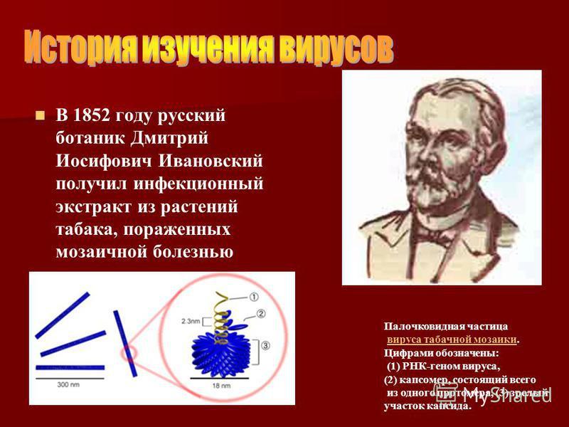 В 1852 году русский ботаник Дмитрий Иосифович Ивановский получил инфекционный экстракт из растений табака, пораженных мозаичной болезнью Палочковидная частица вируса табачной мозаики. Цифрами обозначены:вируса табачной мозаики (1) РНК-геном вируса, (