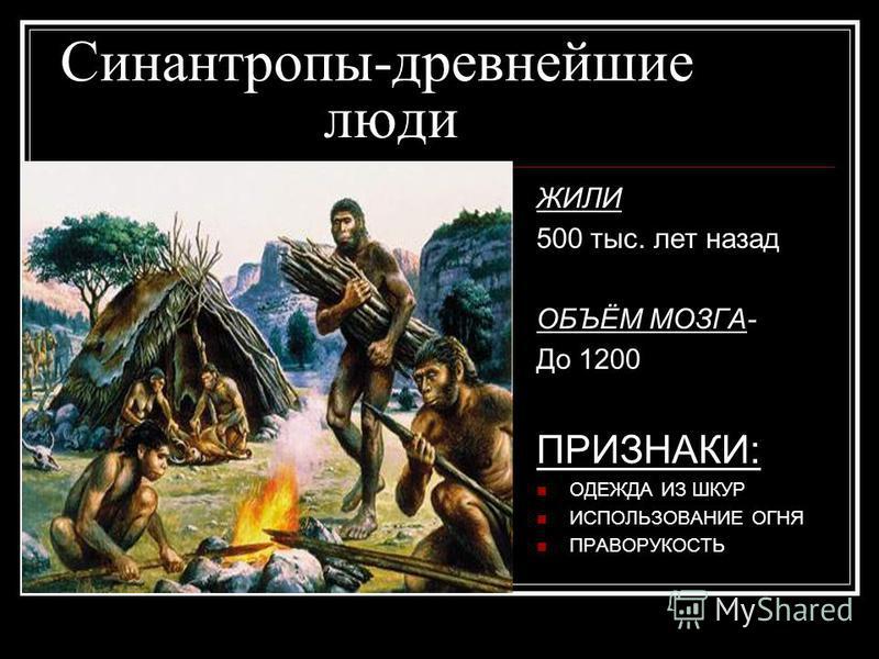 Синантропы-древнейшие люди ЖИЛИ 500 тыс. лет назад ОБЪЁМ МОЗГА- До 1200 ПРИЗНАКИ: ОДЕЖДА ИЗ ШКУР ИСПОЛЬЗОВАНИЕ ОГНЯ ПРАВОРУКОСТЬ