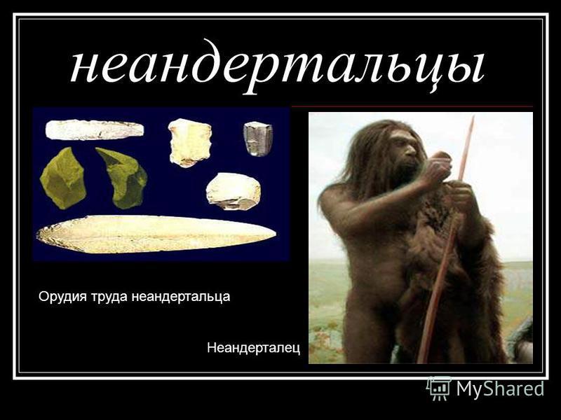 неандертальцы Орудия труда неандертальца Неандерталец