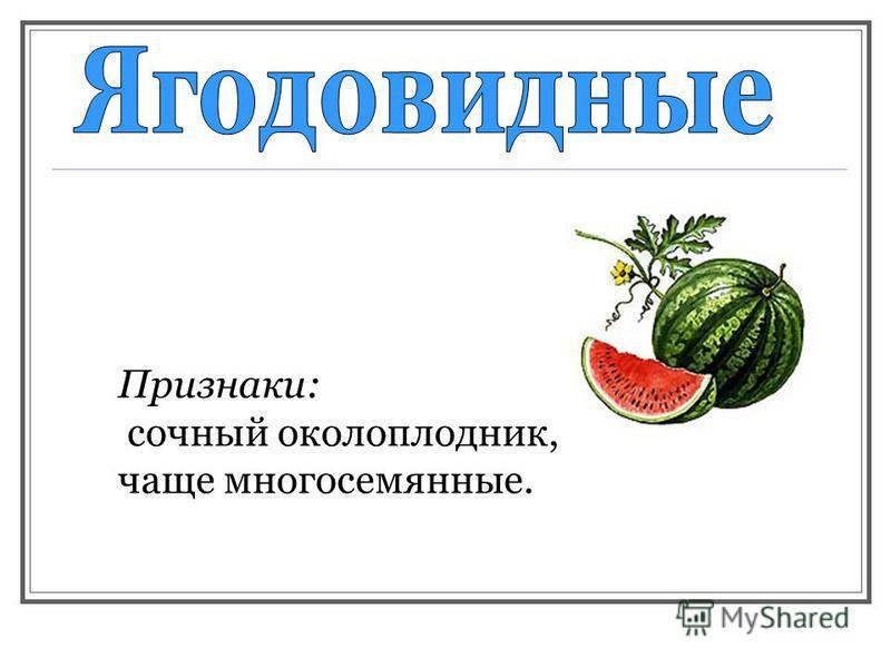 Признаки: сочный околоплодник, чаще многосемянные.