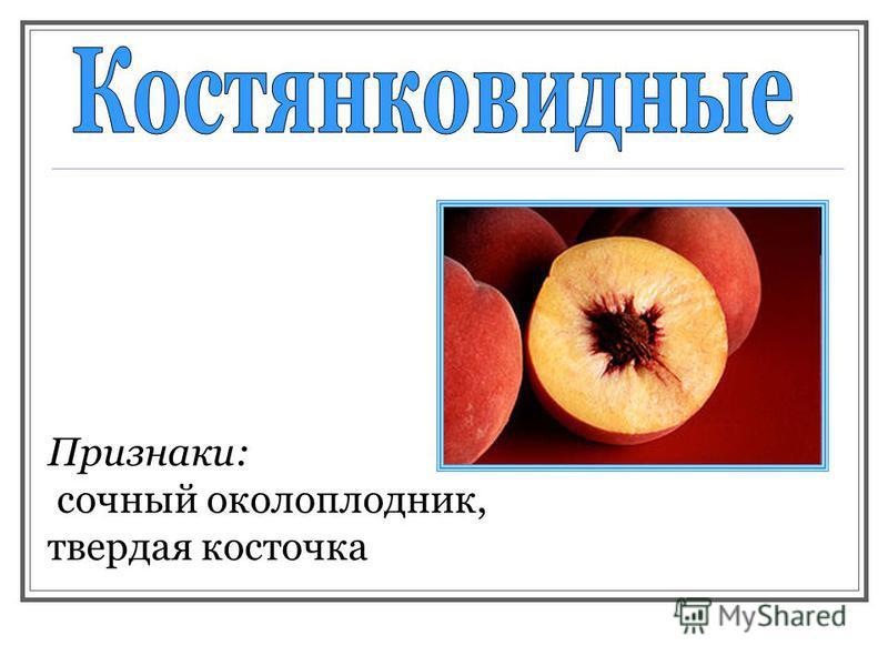 Признаки: сочный околоплодник, твердая косточка