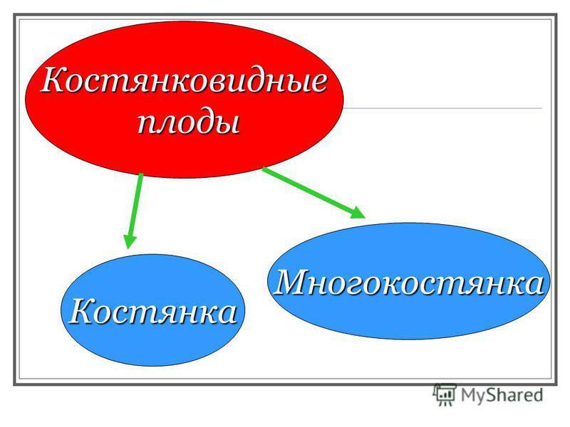 Костянковидные плоды Многокостянка Костянка