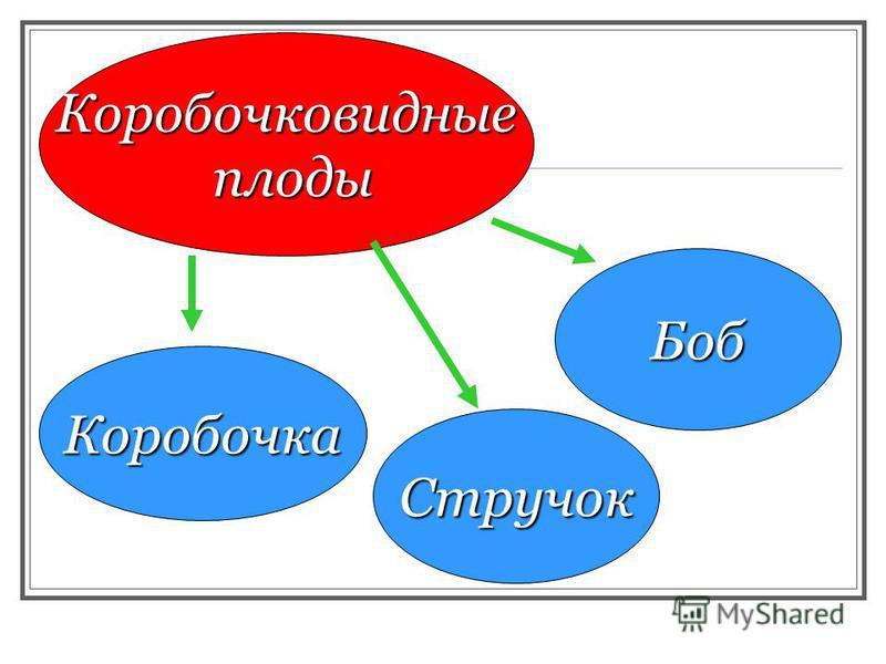 Коробочковидные плоды Боб Стручок Коробочка