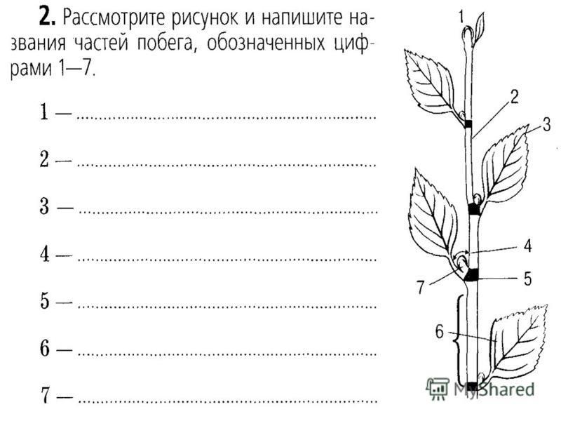 Д.з. п 17, л/р 7