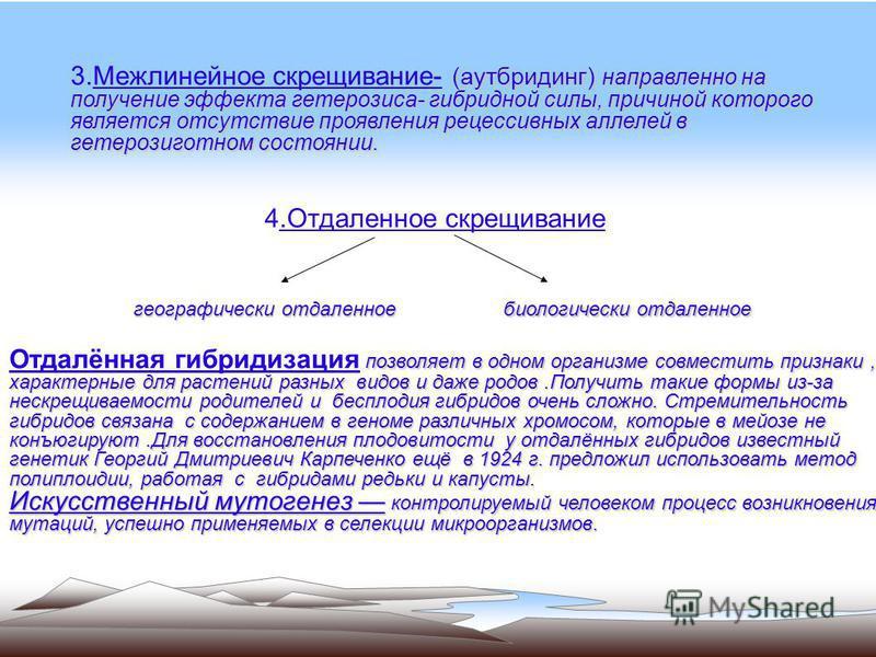 5 Получение сорта Бере зимняя Мичурина