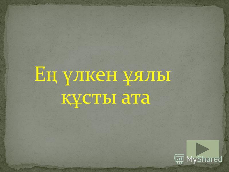 Е ң ү лкен ұ ялы құ сты ата