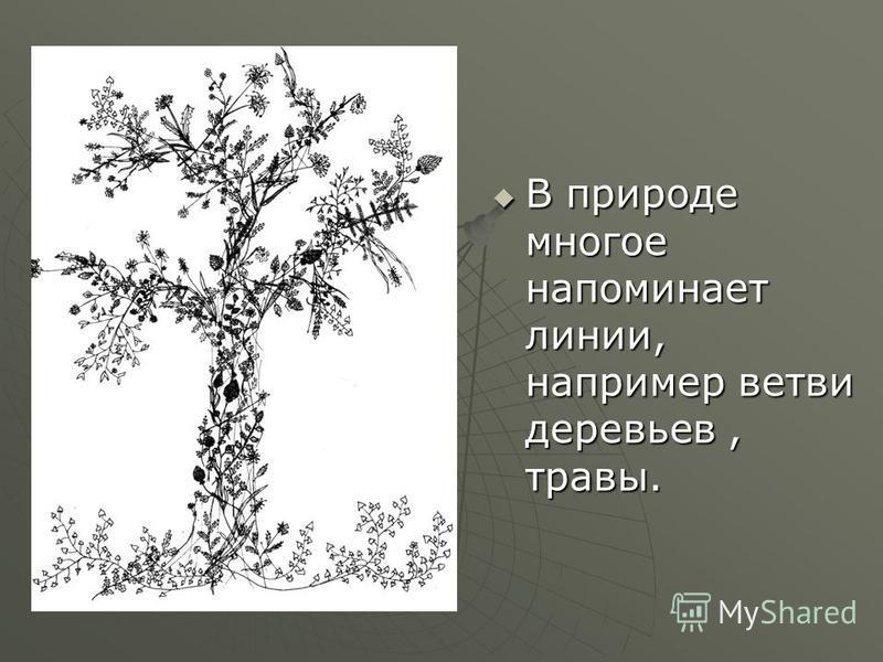 В природе многое напоминает линии, например ветви деревьев, травы. В природе многое напоминает линии, например ветви деревьев, травы.