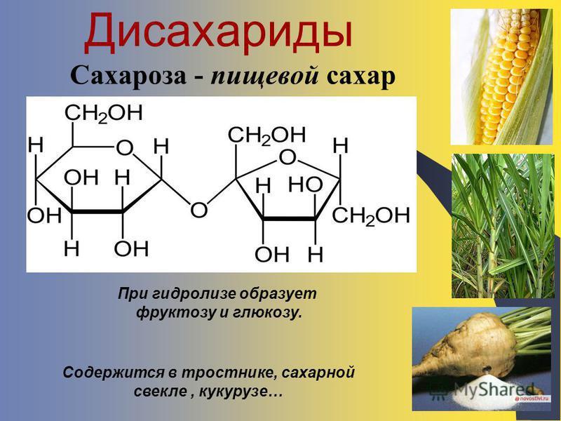 Дисахариды Сахароза - пищевой сахар Содержится в тростнике, сахарной свекле, кукурузе… При гидролизе образует фруктозу и глюкозу.