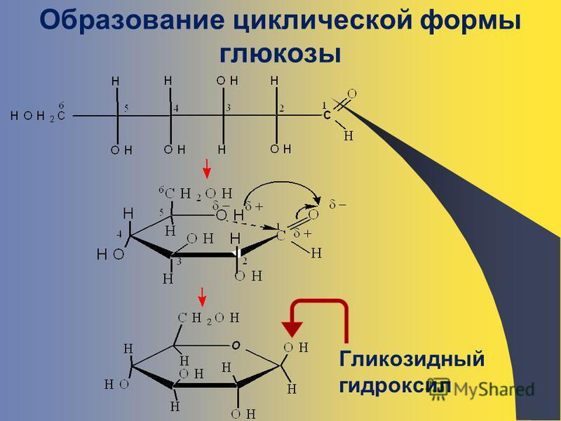Образование циклической формы глюкозы Гликозидный гидроксил