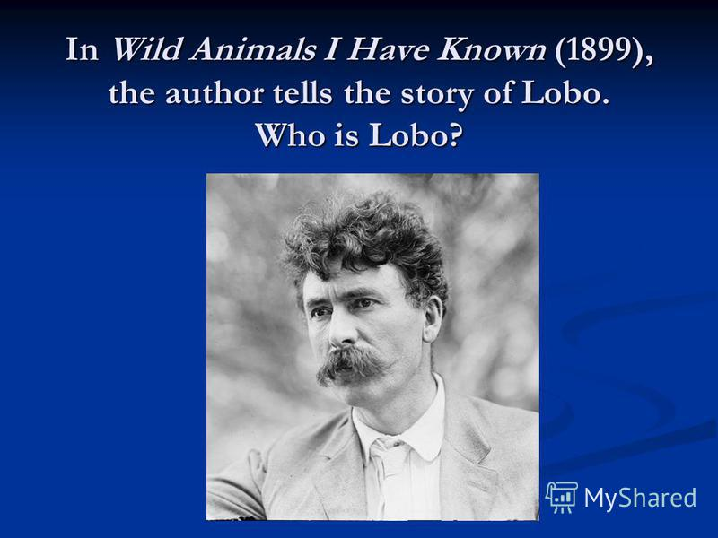 In Wild Animals I Have Known (1899), the author tells the story of Lobo. Who is Lobo?