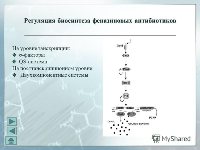 Регуляция биосинтеза феназиновых антибиотиков На уровне транскрипции: σ-факторы QS-система На посттранскрипционном уровне: Двухкомпонентные системы Двухкомпонентные системы